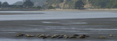 sea lions lying on the beach