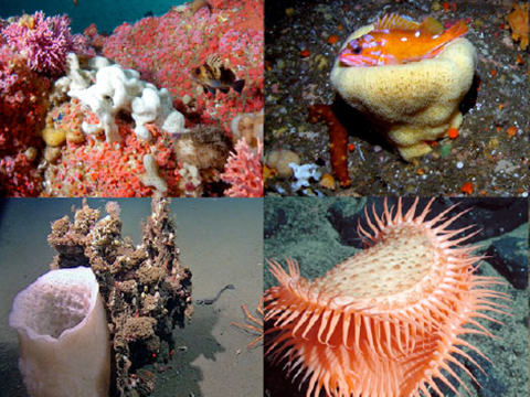 Images from Deep Sea Coral Poster