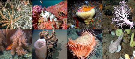deep-sea coral communities