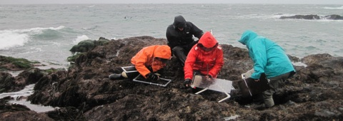 Farallon Island Monitoring Team