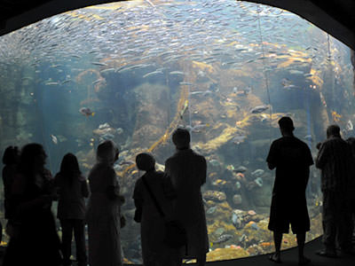 people standing in front of an aquarium