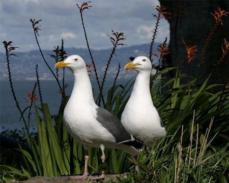 two gulls standing together