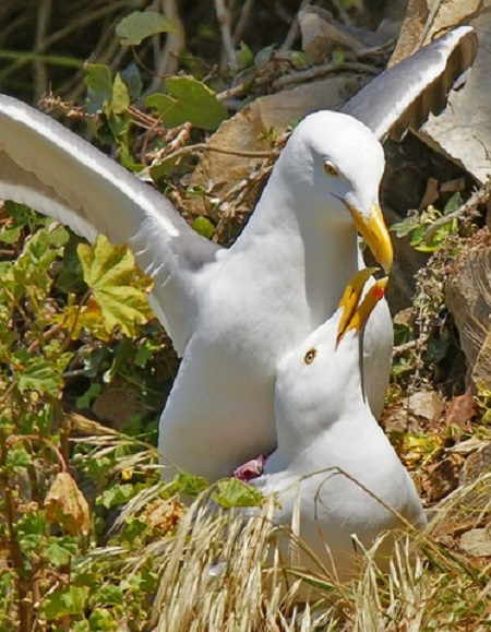 seabirds on the Valentine's Day