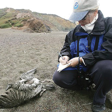 a dead bird on the beach and a volunteer taking notes next to it